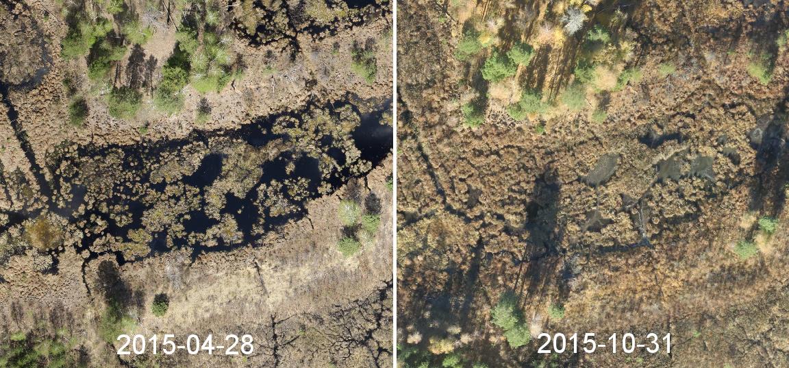 Пересыхание болота в 2015 году в национальном природном парке Слобожанский