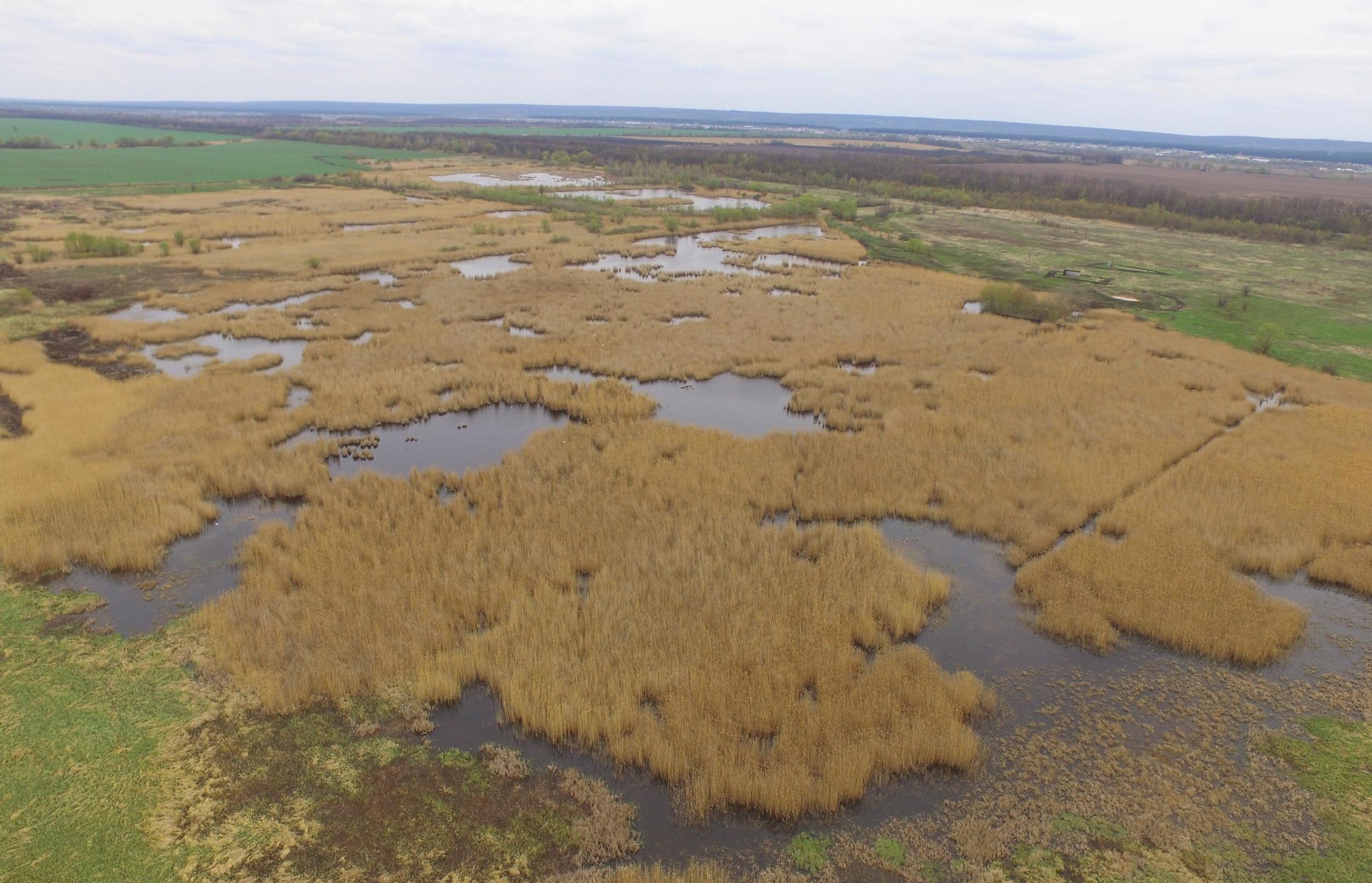 Водно-болотное угодье - Болото Терновское